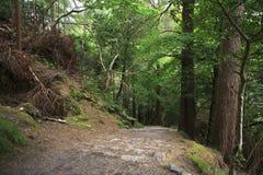 Relictskog i det Torc berget Arkivbild