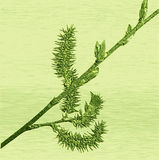 Relief of embossed blooming willow twig Stock Image