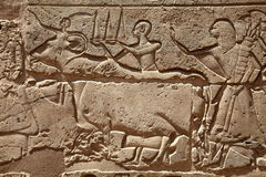 Relief figures in egyptian temple Royalty Free Stock Image