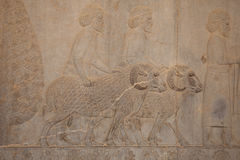 Relief at persepolis, iran Royalty Free Stock Photos