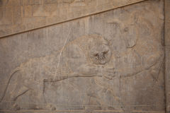Relief at persepolis, iran Royalty Free Stock Images