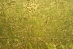 Relief plaster texture with imitation crocodile skin Stock Photography