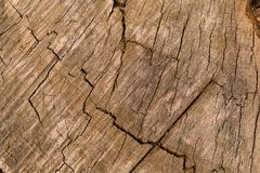 Relief texture of an old oak tree as the background. Wallpaper design royalty free stock photos