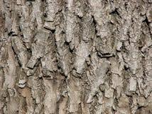 Relief tree bark Royalty Free Stock Photo