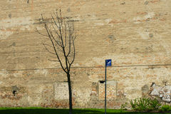 Relief wall. Unusual embossed wall with graffiti. Tree in front of her and a sign of roaming dogs Royalty Free Stock Images