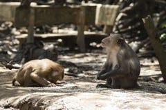 Religião do macaco imagens de stock royalty free