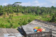 Religiöst erbjuda, ris terrasserar, Ubud, Indonesien Royaltyfri Foto