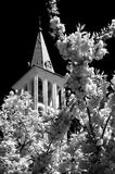 Religion. View of in bloom tree plus steeple Royalty Free Stock Photo
