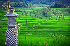 A Religious Artifact in Bali. With beautiful scene of green paddy field Royalty Free Stock Image