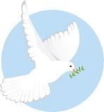 Religious Dove Stock Photos
