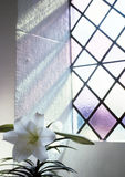 Religious Growth. A flower feeds off the light through a church window Royalty Free Stock Images