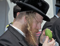 The religious Jew examines ritual citrus Royalty Free Stock Photos