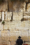 The religious Jew praying at the Western wall. Of the Jerusalem temple Stock Images