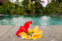 Religious offerings in Bali, colored flowers next to the swimmin Royalty Free Stock Images
