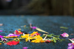 Religious offerings in Bali, colored flowers on old stones. Couple Balinese colored flowers dropped on old stones, religious offerings in Bali, Indonesia Royalty Free Stock Image