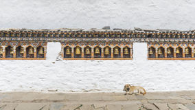 The religious prayer wheels and dog in Bhutan Royalty Free Stock Images