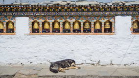 The religious prayer wheels and dog in Bhutan Stock Photography