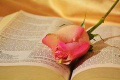 Religious symbols and new beginnings. Beautiful rose on an opened Bible, suggesting the beauty of nature and new beginnings having faith royalty free stock photo