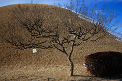Religious Temple Mound. Temple Mound with a cool tree fractal with blue corner and brown grass Stock Photo