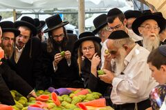 Free Religious Young Jews Choose Etrog Royalty Free Stock Photography - 173231217