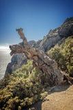 Reliktwacholderbusch- und -kiefernwaldungen, wunderbar wachsend auf Felsen O Stockbild