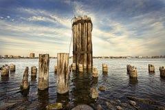 Reliquie del fiume I Immagini Stock Libere da Diritti