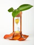 Reloj de arena con las hojas verdes y secas Foto de archivo