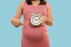 Reloj de la explotación agrícola de la mujer embarazada Es tiempo Foto de archivo libre de regalías
