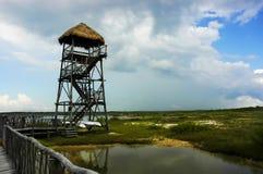 Reloj de la torre del cocodrilo imagen de archivo libre de regalías