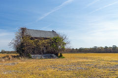 Reloj de los soportes del buitre encima de la casa abandonada descuidada Fotografía de archivo libre de regalías