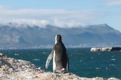 Reloj del pingüino Fotos de archivo
