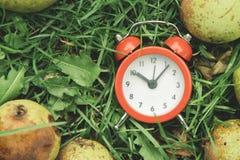 Reloj en la hierba Fotografía de archivo