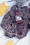 Reloj Lichen Leaves Yellow Autumn del año de la fecha civil del concepto del tiempo Foto de archivo