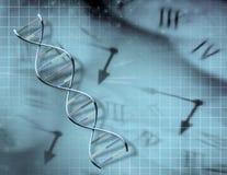 Reloj y DNA Imagenes de archivo