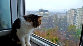 Relojes del gato en la nieve almacen de metraje de vídeo