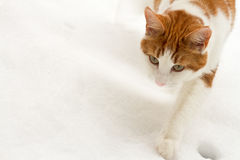 Reluctant cat in snow Royalty Free Stock Image