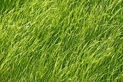 Relva, grass Stock Photography