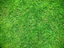 relvado da grama verde Fotos de Stock Royalty Free