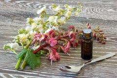 Remèdes de fleur de Bach de châtaigne rouge et blanche Photo libre de droits