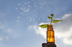 Remèdes naturels - médecines photo stock