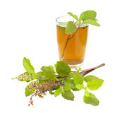 Remédio santamente de Ayurvedic do chá de Tulsi da manjericão Imagens de Stock Royalty Free