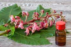 Remédios da flor de Bach da castanha vermelha Imagens de Stock Royalty Free