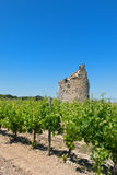 Remain of a tower in vine yard. Remain of a tower in French vine yard Royalty Free Stock Photography