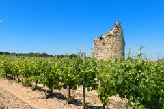 Remain of a tower in vine yard. Remain of a tower in French vine yard Royalty Free Stock Image