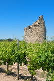 Remain of a tower in vine yard. Remain of a tower in French vine yard Royalty Free Stock Photo