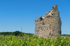 Remain of a tower in vine yard. Remain of a tower in French vine yard Stock Photo