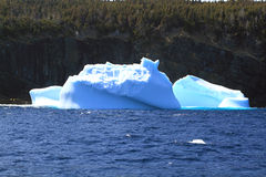 Remaining of big Icebergs reached the shore of Newfoundland Stock Photos