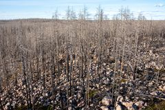 Remaining dead forest after a large forest fire stock images