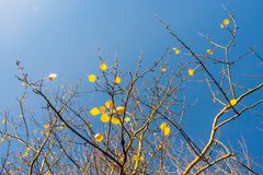 Remaining leaves to be fallen on sunny morning in Autumn. Nature poetic Royalty Free Stock Photos