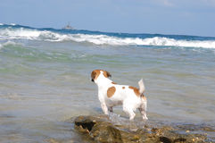 Remaining on the shore. Ship went to sea, could not wait for  favorite dog Royalty Free Stock Photo